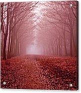 The Golden Path Acrylic Print by Aidan Minter