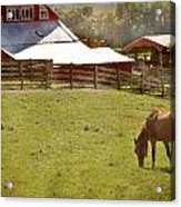 The Horse In The Barn Yard Acrylic Print by Kathy Jennings