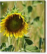 The Loner Acrylic Print by Lisa Moore