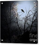 The Night The Raven Appeared In My Dream . 7d12631 Acrylic Print by Wingsdomain Art and Photography