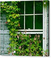 The Other Window Acrylic Print by Lisa  DiFruscio