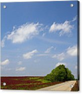 The Road Ahead Is Lined In Red Acrylic Print by Kathy Clark