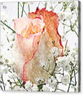 The Rose Acrylic Print by Andee Design