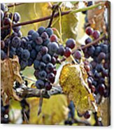 The Vineyard Acrylic Print by Linda Mishler