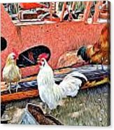 The Walk Of The Cock Acrylic Print by James Steele