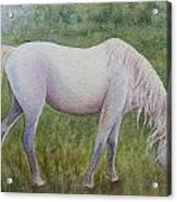 The White Horse Acrylic Print by Kerri Ligatich