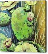Those Bloomin' Cactus Acrylic Print by Cynara Shelton