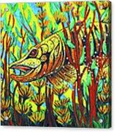 Tiger Muskie Acrylic Print by Bob Crawford