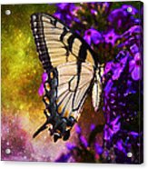 Tiger Swallowtail Feeding In Outer Space Acrylic Print by J Larry Walker