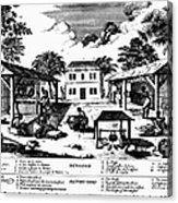 Tobacco Plantation, C1670 Acrylic Print by Granger