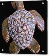 Toni The Turtle Acrylic Print by Dan Townsend