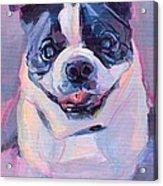 Toothless Acrylic Print by Kimberly Santini