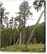 Totem Poles Stand In A Deserted Village Acrylic Print by Taylor S. Kennedy