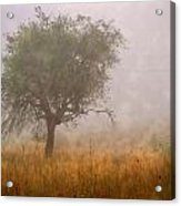 Tree In Fog Acrylic Print by Debra and Dave Vanderlaan