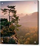 Tree In Morning Llght In Saxon Switzerland Acrylic Print by Andreas Wonisch