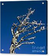 Tree In Winter Against A Blue Sky Acrylic Print by Bernard Jaubert