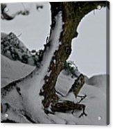 Tree In Winter Acrylic Print by Odd Jeppesen
