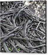 Tree Roots Acrylic Print by Natthawut Punyosaeng