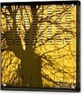 Tree Shadow Acrylic Print by Bernard Jaubert
