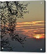 Tree Silhouette At Sunset Acrylic Print by Bruno Santoro