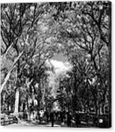 Trees On The Mall In Central Park In Black And White Acrylic Print by Rob Hans