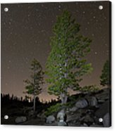 Trees Under Stars Acrylic Print by Sean Duan