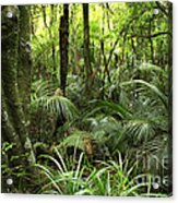 Tropical Jungle Acrylic Print by Les Cunliffe