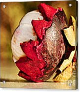Tropical Mangosteen - Ready To Eat Acrylic Print by Kaye Menner