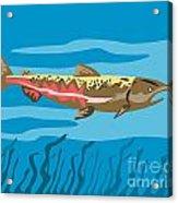 Trout Fish Retro Acrylic Print by Aloysius Patrimonio