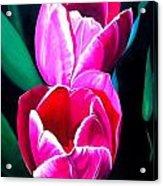 Tulips Acrylic Print by Karen Casciani
