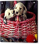 Two Dalmatian Puppies Acrylic Print by Garry Gay