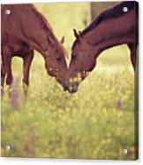 Two Horses In Field Acrylic Print by Stefan Sager