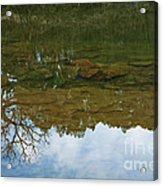 Underwater Landscape Acrylic Print by Lisa Holmgreen