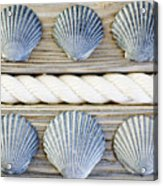 Usa, New York State, New York City, Brooklyn, Collection Of Seashells Acrylic Print by Jamie Grill