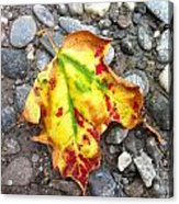 Vermont Foliage - Leaf On Earth Acrylic Print by Elijah Brook