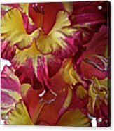 Vibrant Gladiolus Acrylic Print by Susan Herber