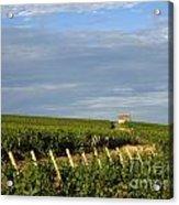 Vines In Burgundy. France Acrylic Print by Bernard Jaubert