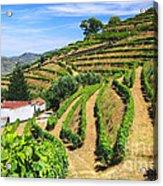 Vineyard Landscape Acrylic Print by Carlos Caetano