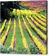 Vineyard Sonoma 7 Acrylic Print by Anthony George