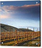 Vineyard Storm Acrylic Print by Mike  Dawson