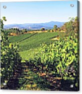 Vineyards In The Yarra Valley, Victoria, Australia Acrylic Print by Peter Walton Photography