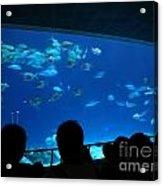 Visitors At Ocean Aquarium Acrylic Print by Yali Shi