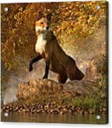 Vixen By The River Acrylic Print by Daniel Eskridge