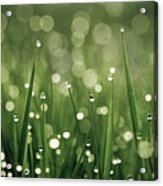 Water Drops On Grass Acrylic Print by Florence Barreau