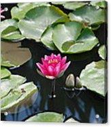 Water Lilies Acrylic Print by Jennifer Ancker