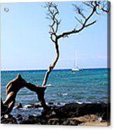 Water Sports In Hawaii Acrylic Print by Karen Nicholson