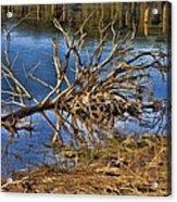 Waterlogged Tree Acrylic Print by Douglas Barnard