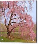 Weeping Spring- Holmdel Park Acrylic Print by Angie Tirado