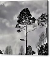 When The Air Gets Too Thin Acrylic Print by Jan Amiss Photography