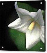 White Balloon Flower-faux Painting Acrylic Print by  Onyonet  Photo Studios